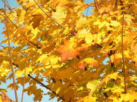 Bad Säckingen, Goldener Oktober